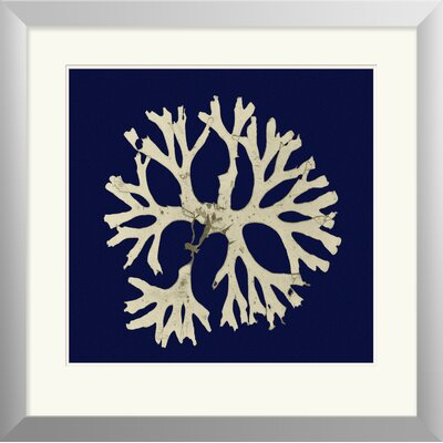 Breakwater Bay Seaweed on Navy I Framed Painting Print