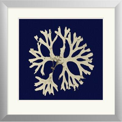 Seaweed on Navy I Framed Painting Print