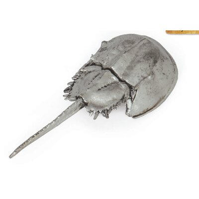 Brushed Nickel Horseshoe Crab