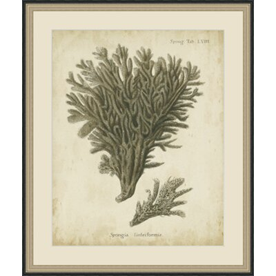 'Esper Antique Coral III' Framed Painting Print GBL65978