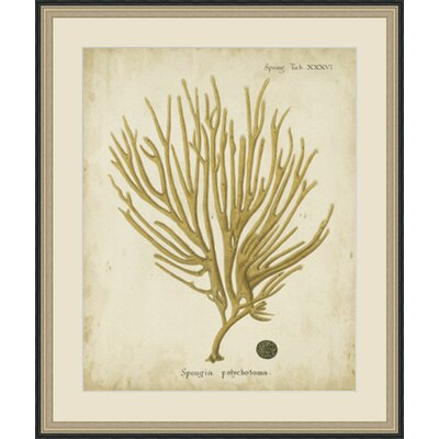 'Esper Antique Coral IV' Framed Painting Print GBL65979