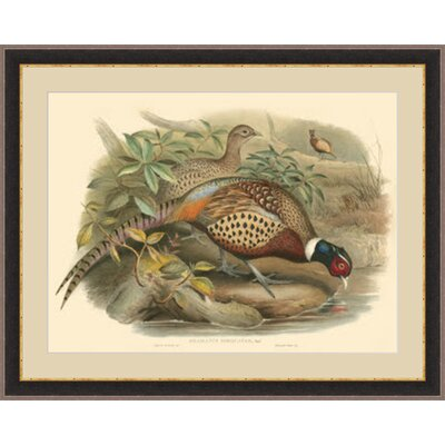 'Gould Pheasants I' Framed Painting Print GBL68991