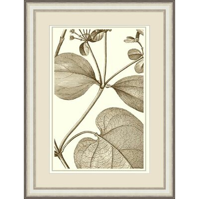 'Cropped Sepia Botanical V' Framed Painting Print GBL57378