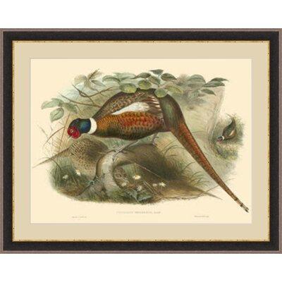 'Gould Pheasants II' Framed Painting Print GBL68992