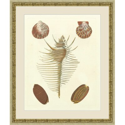 Knorr Shells Framed Painting Print GBL67564