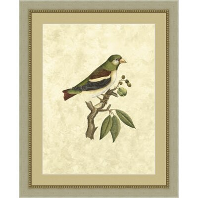 'Shelby Birds V' Framed Painting Print GBL69114