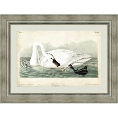 'Trumpeter Swan I' Framed Painting Print GBL92376