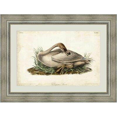 'Trumpete Swan II' Framed Painting Print GBL92377