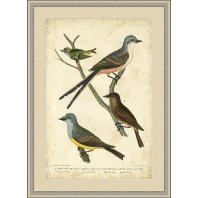 Wilson's Flycatcher Framed Painting Print GBL65972