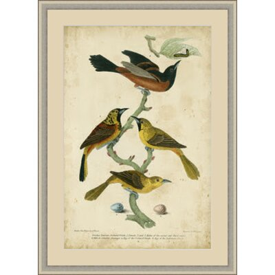 Wilson's Prchard Oriole Framed Painting Print GBL65973