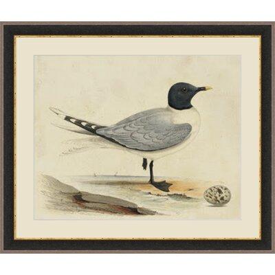 'Meyer Shorebirds I' Framed Painting Print GBL93344