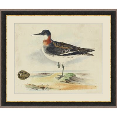 'Meyer Shorebirds II' Framed Painting Print GBL93345