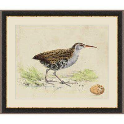 'Meyer Shorebirds III' Framed Painting Print GBL93346