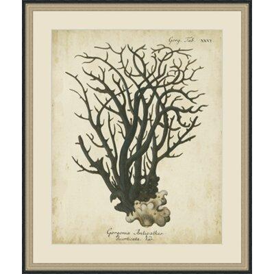 'Esper Antique Coral I' Framed Painting Print GBL65976