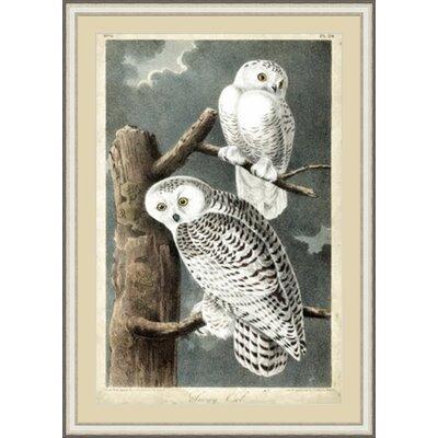 Audubon's Owl Framed Painting Print GBL92391