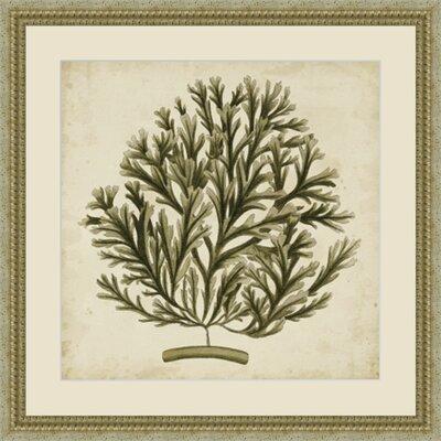 'Vintage Seaweed I' Framed Painting Print GBL92869