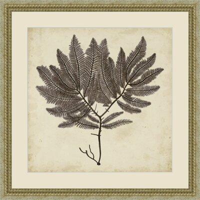 'Vintage Seaweed II' Framed Painting Print GBL92870