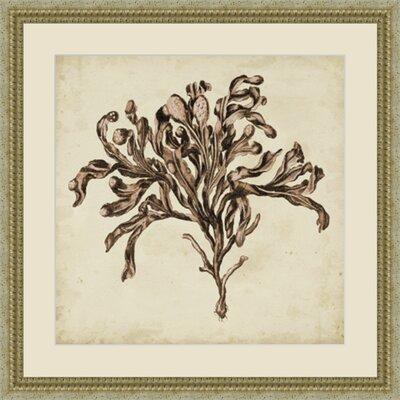 'Vintage Seaweed VI' Framed Painting Print GBL92874