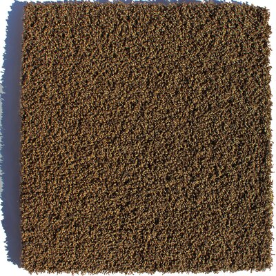 Serenity Residential 24 x 24 Carpet Tile in Brown