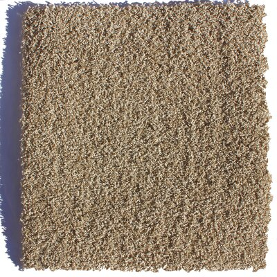 SoHo Residential 24 x 24 Carpet Tile in Brown