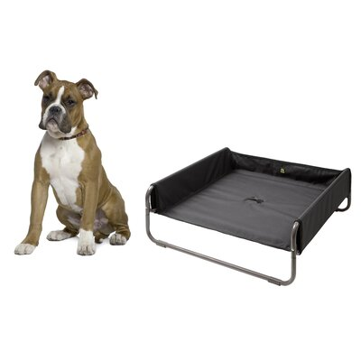 Soft Dog Bed Size: 34 L x 34 W, Color: Anthracite