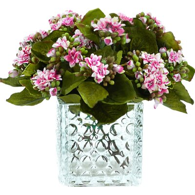 Variegated Pink/White Kalanchoe Arrangement