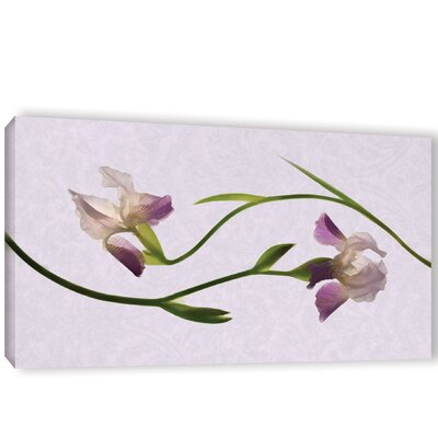 Iris Melody 1 Graphic Art on Wrapped Canvas