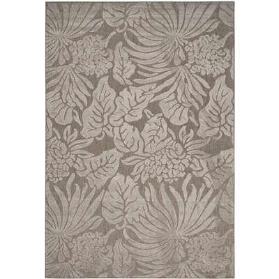 Patricia Area Rug Rug Size: 53 x 77