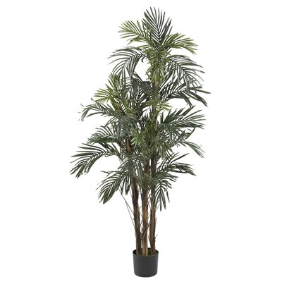 Robellini Palm Tree in Pot Size: 60 H
