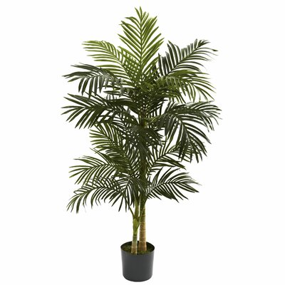 Golden Cane Palm Tree Floor Plant in Pot Size: 60 H x 40 W x 40 D