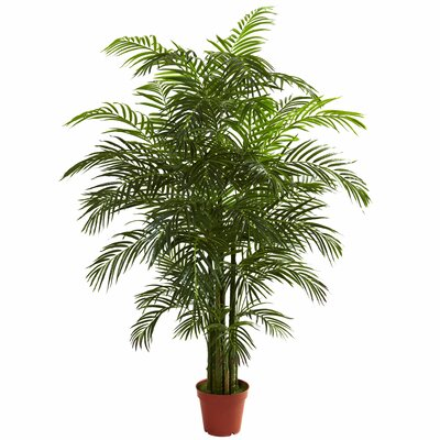 Areca Palm Tree Floor Plant in Pot Size: 78 H x 60 W x 45 D