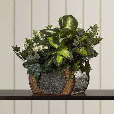 African Violet, Dieffenbachia and Ivy Desk Top Plant in Pot