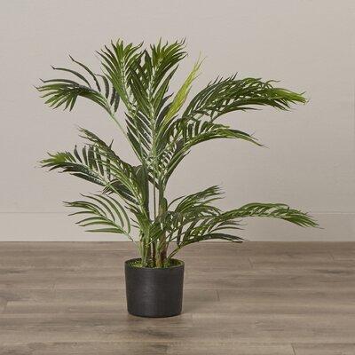Areca Palm Tree Floor Plant Size: 30 H x 24 W x 24 D