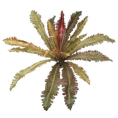 Margarintum Hanging Plant