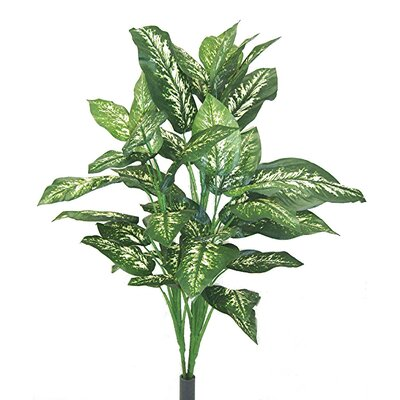 Dieffenbachia Floor Plant