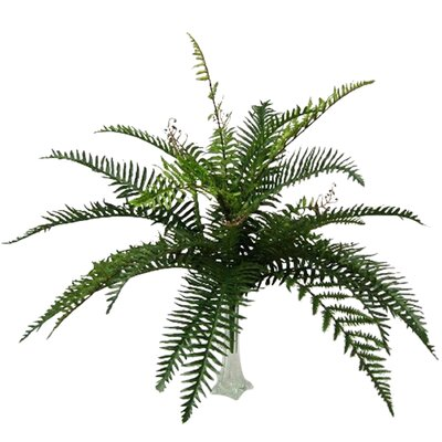 River Fern Bush