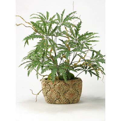 Finger Aralia Branches Floor Plant in Planter