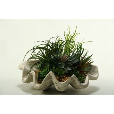 Pearl Grass, Assorted Echeveria, Aloe and Succulents Desk Top Plant in Decorative Vase