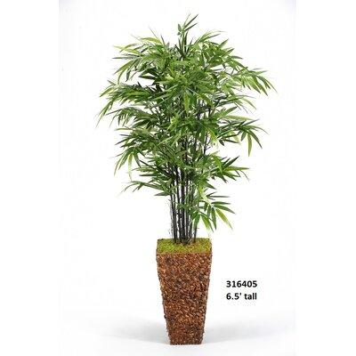 Bamboo Tree Floor Plant in Planter