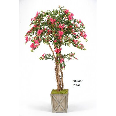 Bougainvillea Tree in Planter