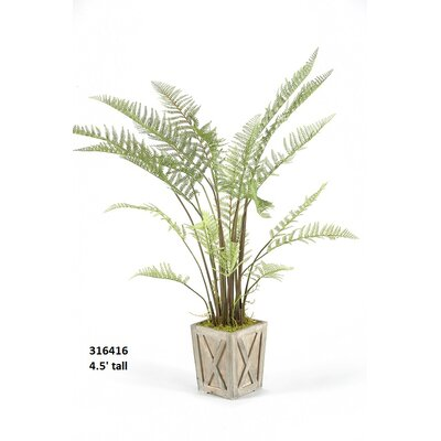 Spore Fern Floor Plant in Planter