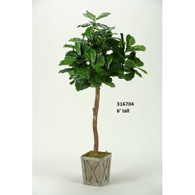 Fiddle Leaf Fig Tree in Planter