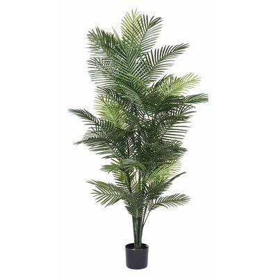 UV Robellini Palm Tree in Pot