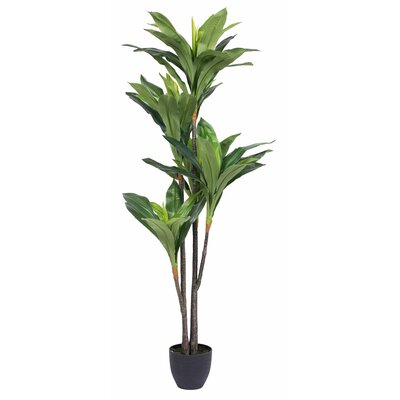 Real Touch Dracaena Tree in Pot