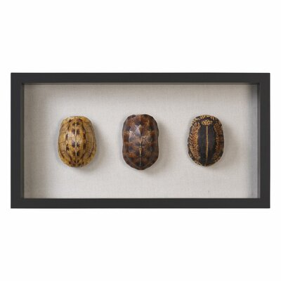 Brown/Yellow Tortoise Shells Shadow Box Wall Décor