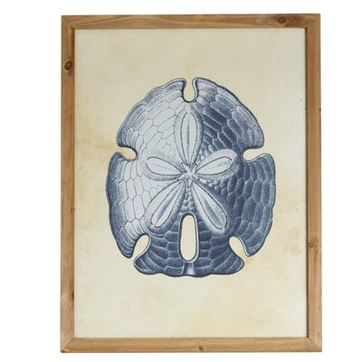 Sand Dollar Framed Graphic Art