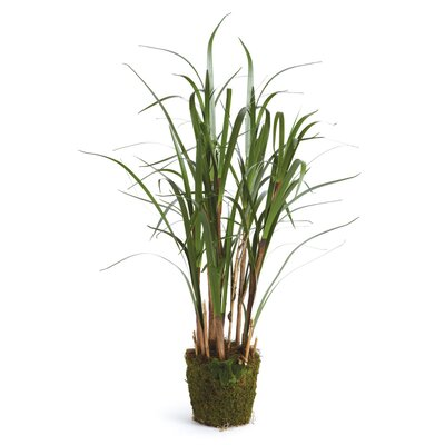 Reed Grass in Planter