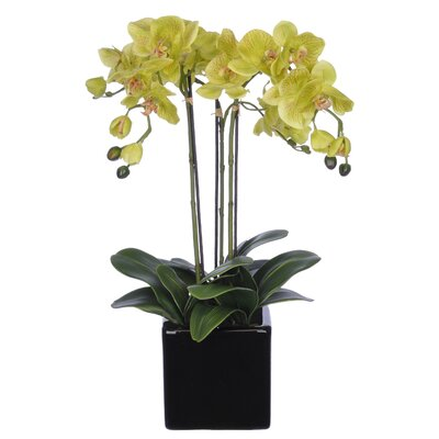 Orchid Arrangement in Cube Ceramic Vase Color: Lime Green