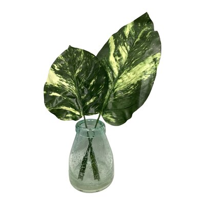 Giant Pothos Leaves in Glass Vase
