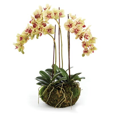 Princeville Mini Garden Drop-in Orchids